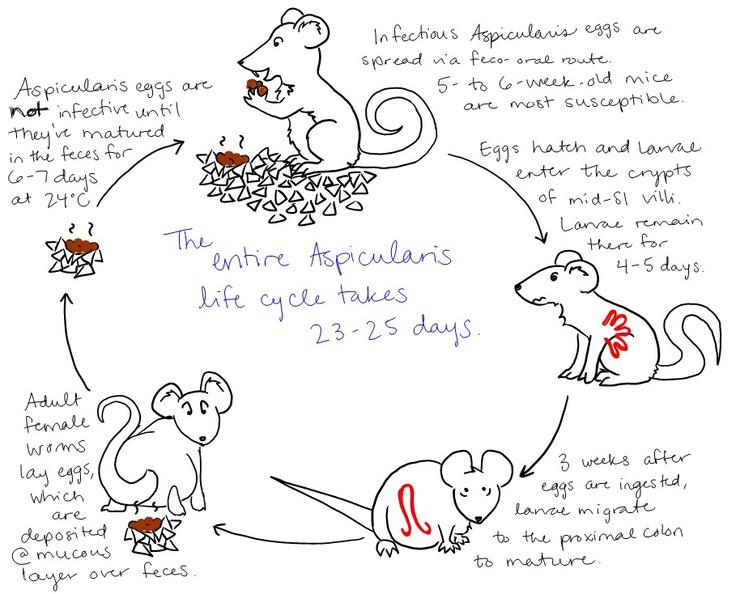 veterinary parasitology study guide