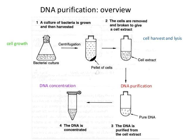 plasmid isolation application